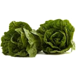 Photo of Lettuce Baby Cos Twin Pack