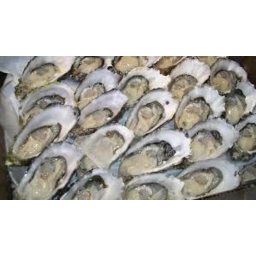 Photo of Tas Oysters Doz.