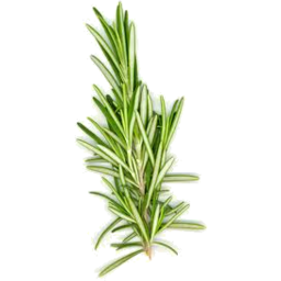 Photo of Herbs Rosemary Fresh