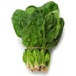 Photo of Spinach English Bunch