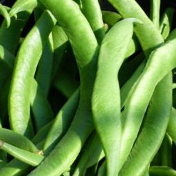 Photo of Beans Runner KG