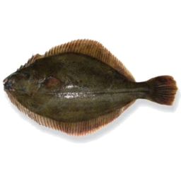 Photo of Flounder Kg