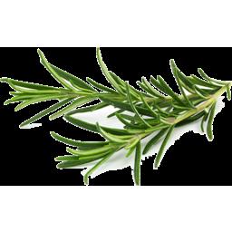 Photo of Fresh Leaf Rosemary