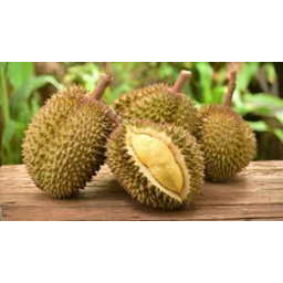 Photo of Durian Kg