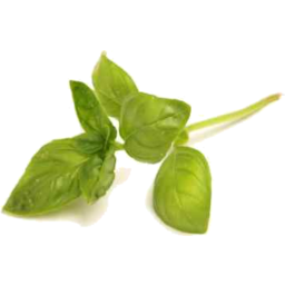 Photo of Herbs - Basil