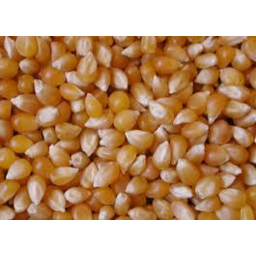 Photo of Corn Popping 250g