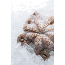 Photo of Tassie Tumbled Octopus (Frozen)