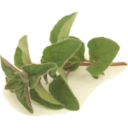Photo of Thymebank Oregano 10g