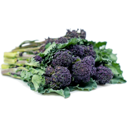 Photo of Baby Broccoli Purple Bunch