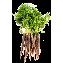 Photo of Dutch Carrot - Purple