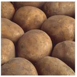 Photo of Potatoes Brushed Agria 5kg