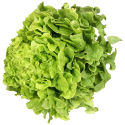 Photo of Fancy Lettuce