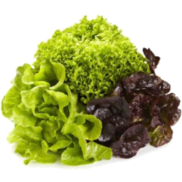 Photo of Mixed Hydro Lettuce each
