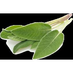 Photo of Fresh Sage