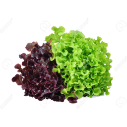 Photo of Lettuce Red or Green Oak
