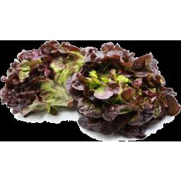 Photo of Lettuce Red Oak Each