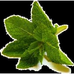 Photo of Herbs - Mint