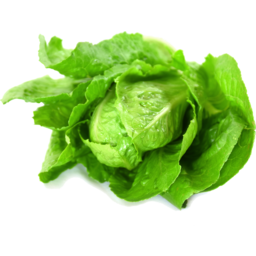 Photo of Lettuce Cos