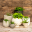 Photo of Potted Plant Small