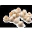 Photo of Mushrooms - Button