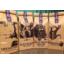 Photo of Duyu - Coffee - 250g