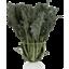 Photo of Kale - Green Russian