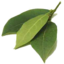 Photo of Bay Leaves