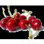 Photo of Cherries **250g punnet**