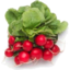 Photo of Radish Bunch Cert Organic