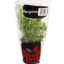 Photo of Superb Herb Living Herb Marjoram