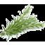 Photo of Thymebank Rosemary 10g