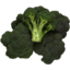 Photo of Broccoli