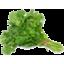 Photo of Flat Leaf Parsley Bunch