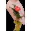 Photo of Single Rose