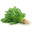 Photo of Spinach English Leaf (Bunch)