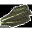 Photo of Cabbage Black
