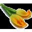 Photo of Zucchini Flowers