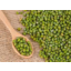 Photo of Mung Beans - Bulk