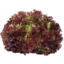 Photo of Fancy Lettuce Red- Rosso