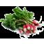 Photo of Radish - Organic