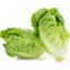 Photo of Lettuce Baby Cos