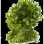 Photo of Watercress