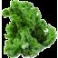 Photo of Kale Green Stem