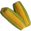 Photo of Sweet Corn Cob