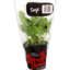 Photo of Superb Herb Living Herb Sage