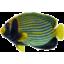 Photo of Plush Thornback Fish 45cm