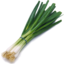 Photo of Onion - Spring