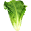 Photo of Cos Lettuce