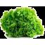 Photo of Thymebank Lettuce Fancy