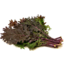 Photo of Kale Bunch Red
